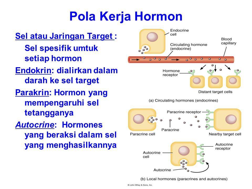 R ESEPTOR H ORMON Ada dua macam reseptor hormon: 1.Reseptor yang mengikat hormon di luar sel.