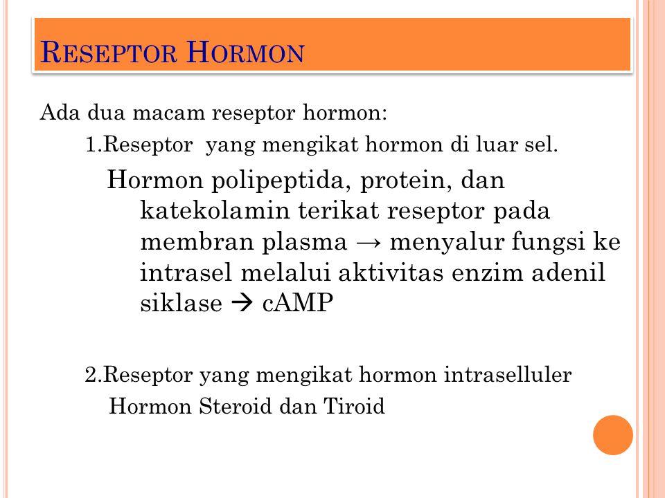 R ESEPTOR H ORMON Ada dua macam reseptor hormon: 1.Reseptor yang mengikat hormon di luar sel. Hormon polipeptida, protein, dan katekolamin terikat res