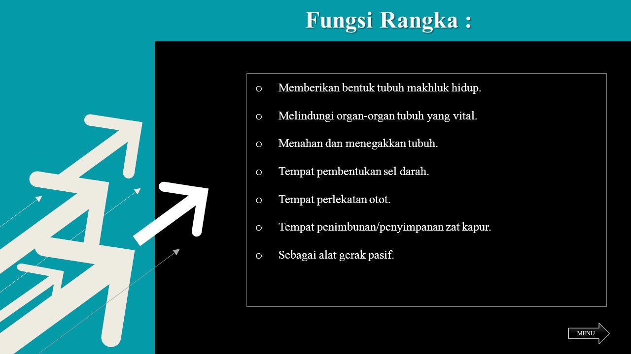 Fungsi Rangka : o Memberikan bentuk tubuh makhluk hidup. o Melindungi organ-organ tubuh yang vital. o Menahan dan menegakkan tubuh. o Tempat pembentuk