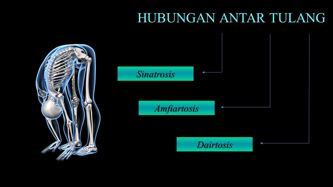 HUBUNGAN ANTAR TULANG Sinatrosis Amfiartosis Dairtosis