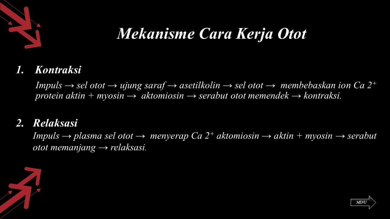 Mekanisme Cara Kerja Otot 1. Kontraksi Impuls → sel otot → ujung saraf → asetilkolin → sel otot → membebaskan ion Ca 2 + protein aktin + myosin → akto