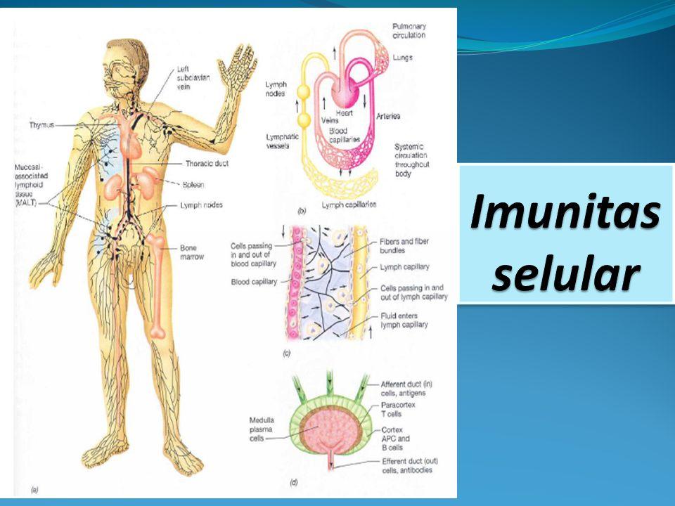 Antibodi tidak dapat menjangkau mikroorganisme yang berkembang biak intraseluler.