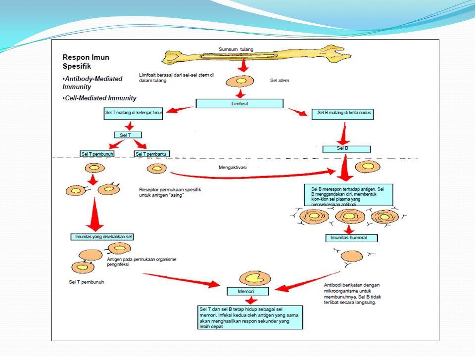 Pada dasarnya, respons non spesifik disebut juga komponen nonadaptif atau innate, atau imunitas alamiah dan adaptif bekerja saling melengkapi.