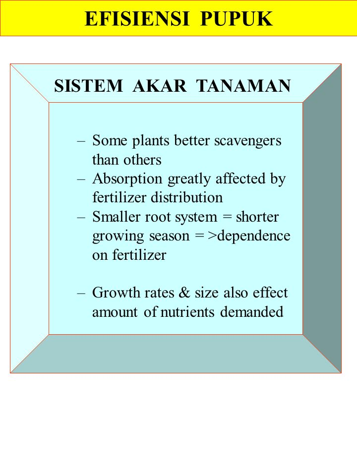 –Some plants better scavengers than others –Absorption greatly affected by fertilizer distribution –Smaller root system = shorter growing season = >dependence on fertilizer –Growth rates & size also effect amount of nutrients demanded EFISIENSI PUPUK SISTEM AKAR TANAMAN