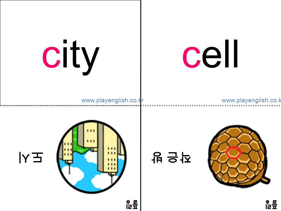 www.playenglish.co.kr city 도시 cell 작은 방