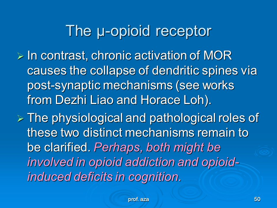 prof. aza49 The μ-opioid receptor  The μ opioid receptors (MOR) can exist either presynaptically or postsynaptically depending upon cell types. MOR c
