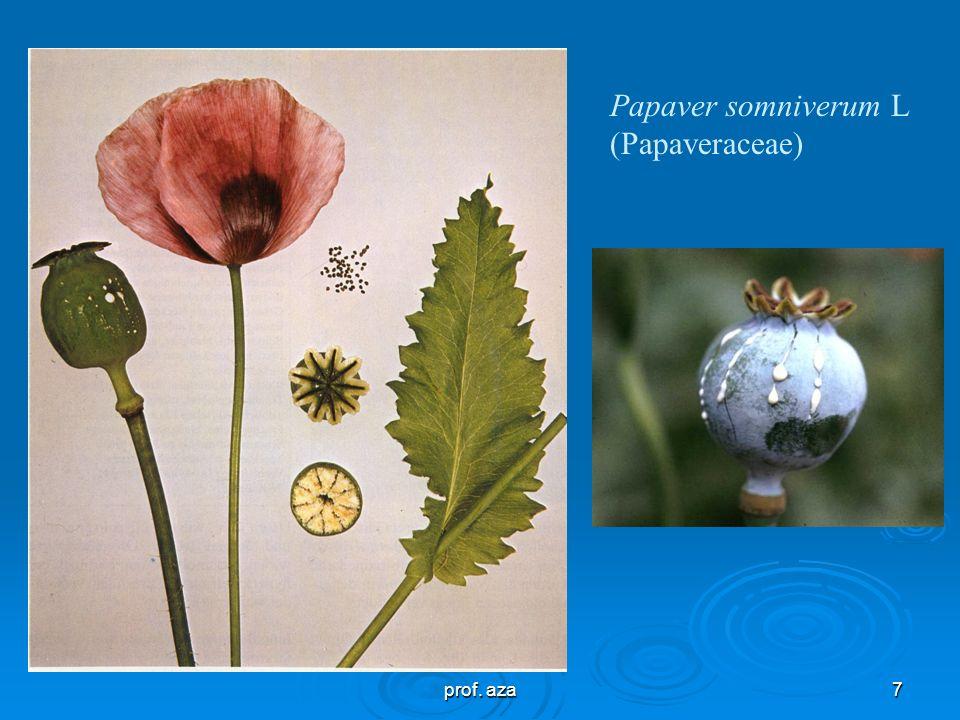 7 Papaver somniverum L (Papaveraceae)