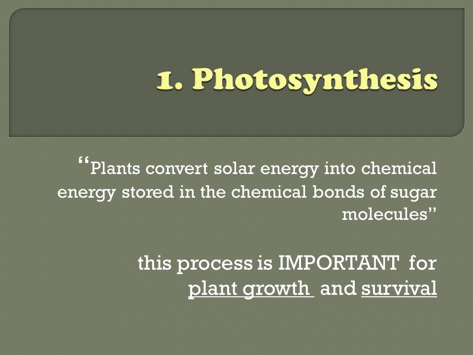 Plants convert solar energy into chemical energy stored in the chemical bonds of sugar molecules this process is IMPORTANT for plant growth and survival