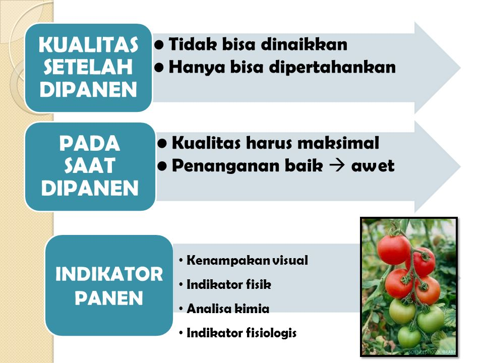 BUAH & SAYUR Kadar air tinggi > 70% - 85% Kadar protein : tidak lebih 3,5% Kadar lemak : tidak lebih 0,5% (kecuali alpokat) Sumber karbohidrat, 2 jenis : dapat dicerna (gula, pati) tidak dapat dicerna : dietary fiber (serat makanan) Sumber mineral dan vitamin Zat warna (pigmen)