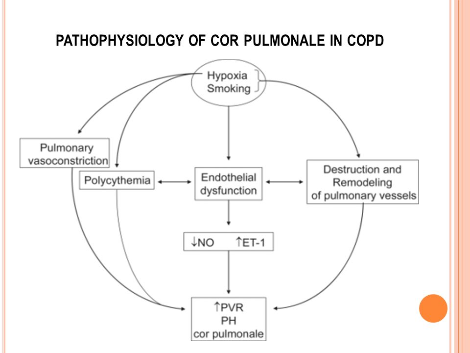 PATHOPHYSIOLOGY OF COR PULMONALE IN COPD