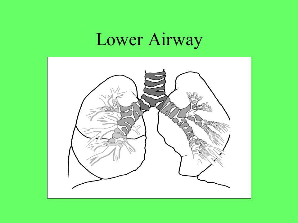 Lower Airway