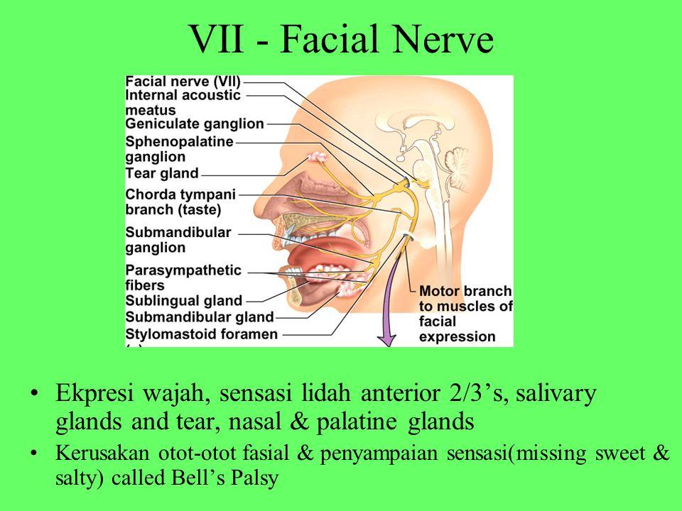 VII - Facial Nerve Ekpresi wajah, sensasi lidah anterior 2/3's, salivary glands and tear, nasal & palatine glands Kerusakan otot-otot fasial & penyamp