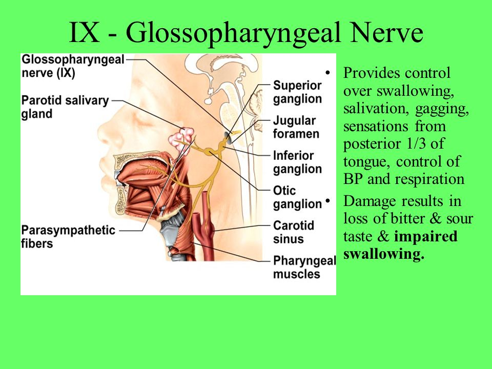 IX - Glossopharyngeal Nerve Provides control over swallowing, salivation, gagging, sensations from posterior 1/3 of tongue, control of BP and respirat