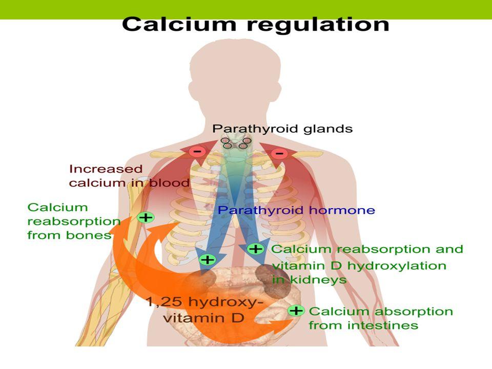 Pemeriksaan penunjang Didapatkan: A low blood-calcium level A low parathyroid hormone level A high blood-phosphorus level A low blood-magnesium level Kalsium serum rendah.