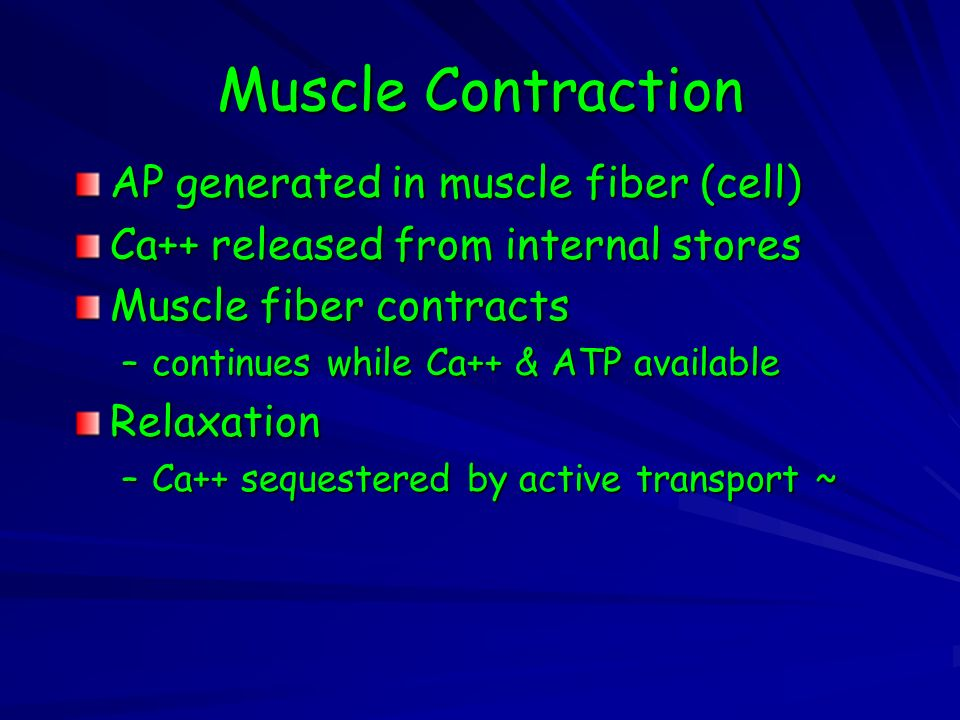 Muscle Contraction AP generated in muscle fiber (cell) Ca++ released from internal stores Muscle fiber contracts –continues while Ca++ & ATP available Relaxation –Ca++ sequestered by active transport ~