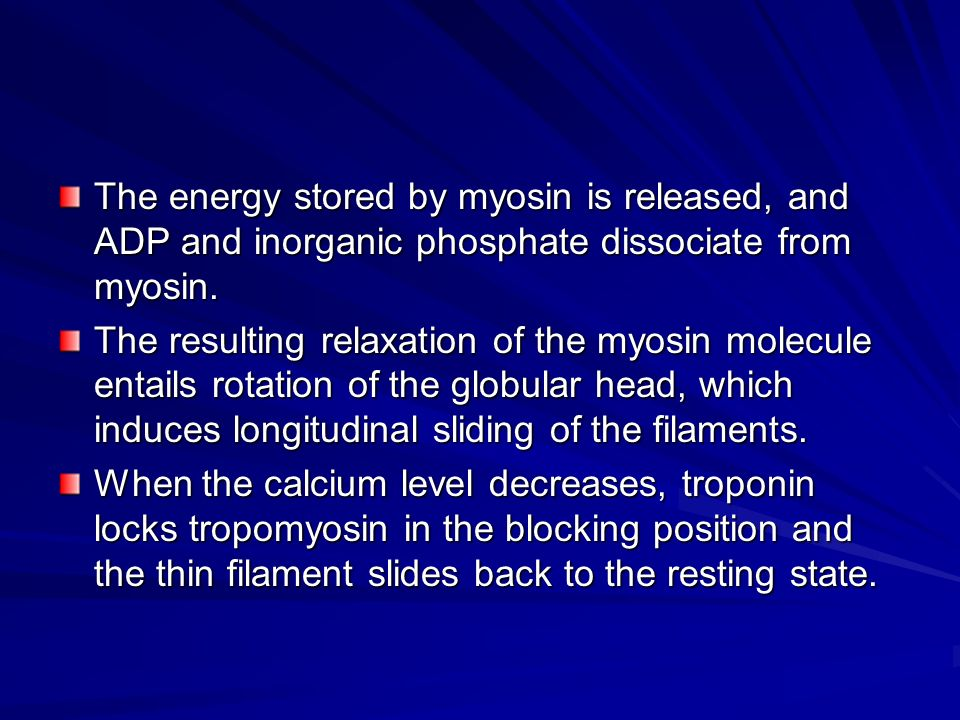 The energy stored by myosin is released, and ADP and inorganic phosphate dissociate from myosin.