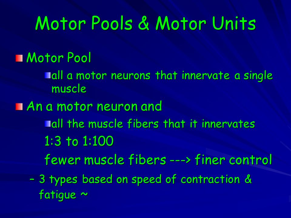 Motor Pool all a motor neurons that innervate a single muscle An a motor neuron and all the muscle fibers that it innervates 1:3 to 1:100 fewer muscle fibers ---> finer control –3 types based on speed of contraction & fatigue ~ Motor Pools & Motor Units