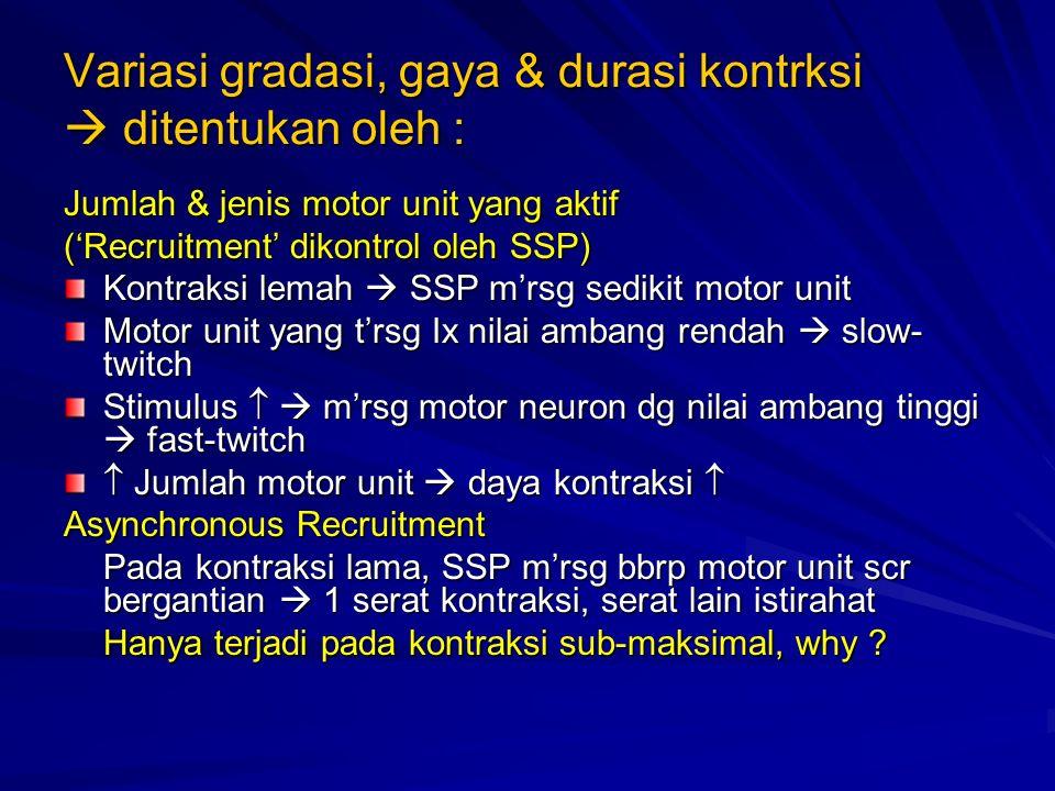 Variasi gradasi, gaya & durasi kontrksi  ditentukan oleh : Jumlah & jenis motor unit yang aktif ('Recruitment' dikontrol oleh SSP) Kontraksi lemah  SSP m'rsg sedikit motor unit Motor unit yang t'rsg Ix nilai ambang rendah  slow- twitch Stimulus   m'rsg motor neuron dg nilai ambang tinggi  fast-twitch  Jumlah motor unit  daya kontraksi  Asynchronous Recruitment Pada kontraksi lama, SSP m'rsg bbrp motor unit scr bergantian  1 serat kontraksi, serat lain istirahat Hanya terjadi pada kontraksi sub-maksimal, why ?