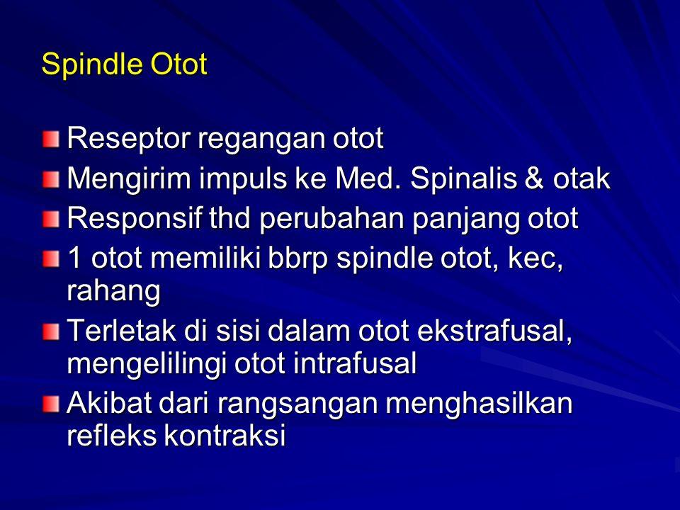 Spindle Otot Reseptor regangan otot Mengirim impuls ke Med.
