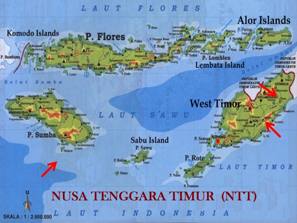  Letak Geografis : 8 0 -12 0 LS dan 118 0 -125 0 BT  Jumlah Pulau : (Bakorsurtanal) 1.192 buah (besar & kecil)  Iklim : 8 bulan (kemarau/kering) dan 4 bulan (hujan/basah)  Luas Wilayah : ± 49.852,14 km 2 Daratan dan ± 200.000 km 2 Lautan  Jumlah Penduduk: 5.036.897 Jiwa (BPS NTT 2014)  Kabupaten: 21 dan 1 kota  Kecamatan: 298 buah  Puskesmas: 368 buah  Desa / Kel.: 2.966 buah  Pustu : 1043 buah  Poskesdes: 235 buah  Posyandu: 9420 buah  Polindes: 1303 buah  Pulau yang bernama 473 buah  Pulau yang berpenghuni : 43 buah Kadinkes NTT