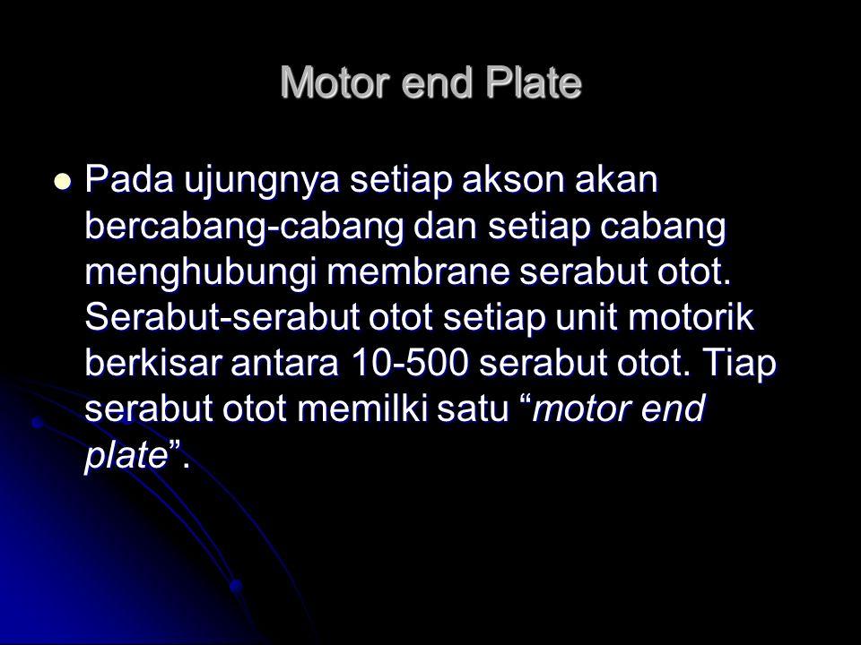 Motor end Plate Pada ujungnya setiap akson akan bercabang-cabang dan setiap cabang menghubungi membrane serabut otot. Serabut-serabut otot setiap unit