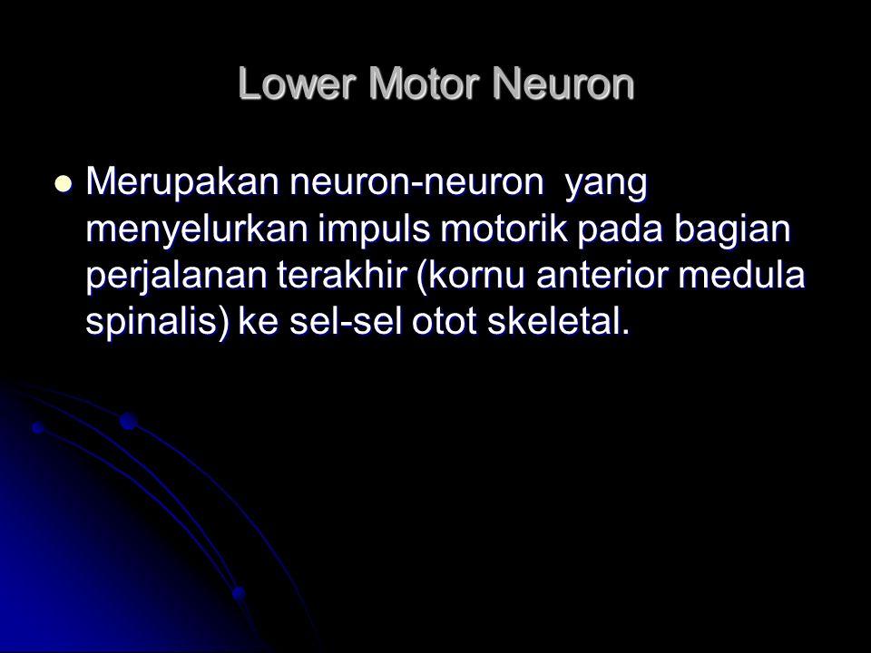 Lower Motor Neuron Merupakan neuron-neuron yang menyelurkan impuls motorik pada bagian perjalanan terakhir (kornu anterior medula spinalis) ke sel-sel
