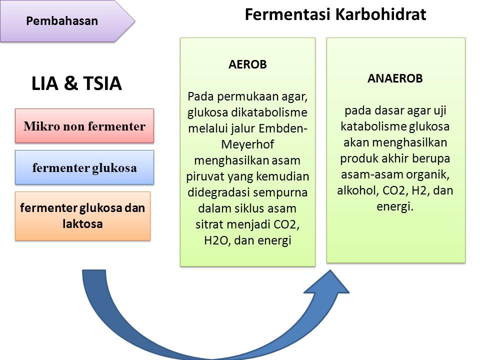 Pembahasan LIA & TSIA Mikro non fermenter fermenter glukosa fermenter glukosa dan laktosa AEROB Pada permukaan agar, glukosa dikatabolisme melalui jalur Embden- Meyerhof menghasilkan asam piruvat yang kemudian didegradasi sempurna dalam siklus asam sitrat menjadi CO2, H2O, dan energi AEROB Pada permukaan agar, glukosa dikatabolisme melalui jalur Embden- Meyerhof menghasilkan asam piruvat yang kemudian didegradasi sempurna dalam siklus asam sitrat menjadi CO2, H2O, dan energi ANAEROB pada dasar agar uji katabolisme glukosa akan menghasilkan produk akhir berupa asam-asam organik, alkohol, CO2, H2, dan energi.
