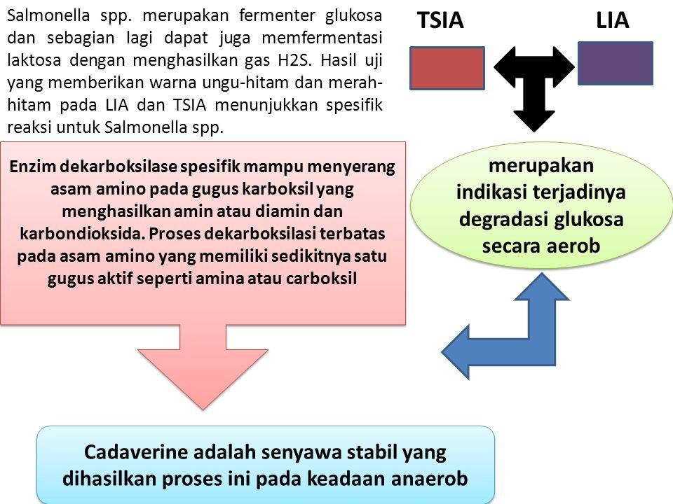 Salmonella spp. merupakan fermenter glukosa dan sebagian lagi dapat juga memfermentasi laktosa dengan menghasilkan gas H2S. Hasil uji yang memberikan