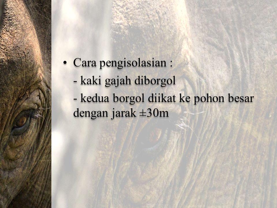 Cara pengisolasian : - kaki gajah diborgol - kedua borgol diikat ke pohon besar dengan jarak ±30m Cara pengisolasian : - kaki gajah diborgol - kedua b