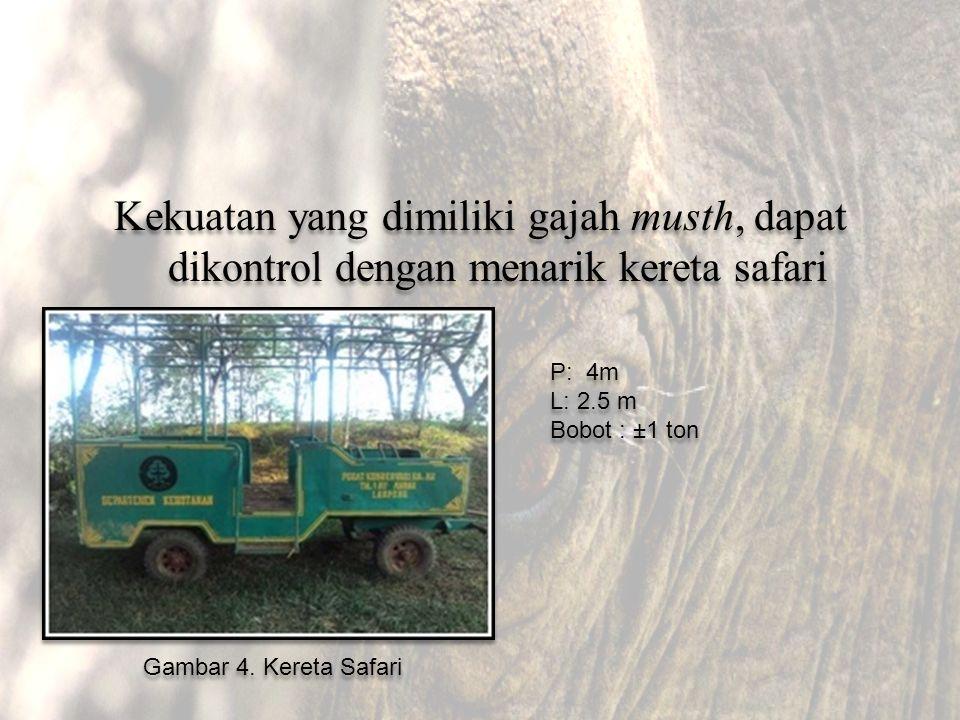 Kekuatan yang dimiliki gajah musth, dapat dikontrol dengan menarik kereta safari Gambar 4. Kereta Safari P: 4m L: 2.5 m Bobot : ±1 ton P: 4m L: 2.5 m