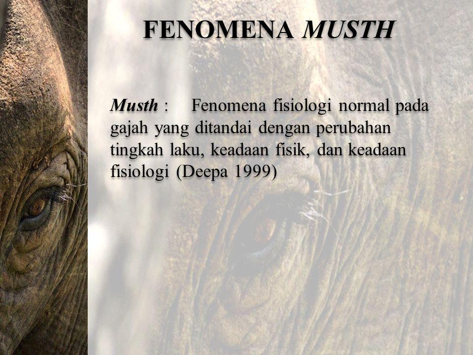 FENOMENA MUSTH Musth : Fenomena fisiologi normal pada gajah yang ditandai dengan perubahan tingkah laku, keadaan fisik, dan keadaan fisiologi (Deepa 1