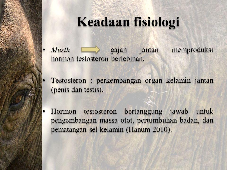 Keadaan fisiologi Musth gajah jantan memproduksi hormon testosteron berlebihan. Testosteron : perkembangan organ kelamin jantan (penis dan testis). Ho