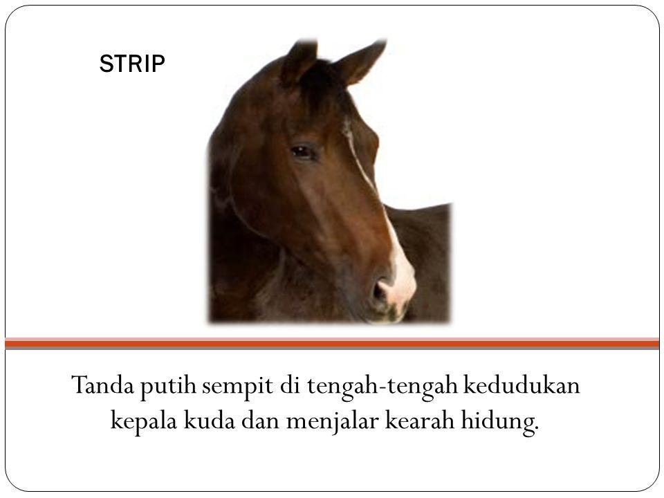 STRIP Tanda putih sempit di tengah-tengah kedudukan kepala kuda dan menjalar kearah hidung.