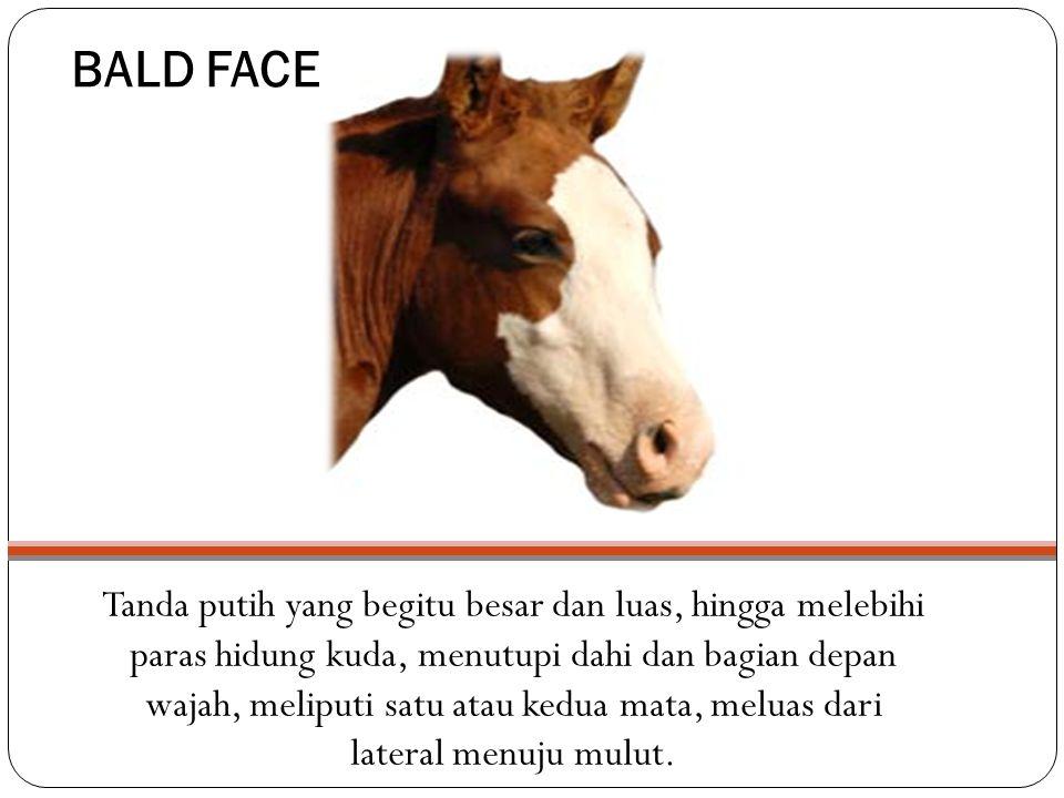 BALD FACE Tanda putih yang begitu besar dan luas, hingga melebihi paras hidung kuda, menutupi dahi dan bagian depan wajah, meliputi satu atau kedua mata, meluas dari lateral menuju mulut.