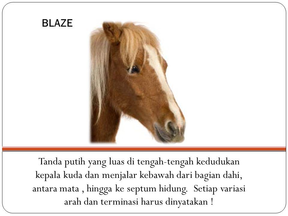 BLAZE Tanda putih yang luas di tengah-tengah kedudukan kepala kuda dan menjalar kebawah dari bagian dahi, antara mata, hingga ke septum hidung.