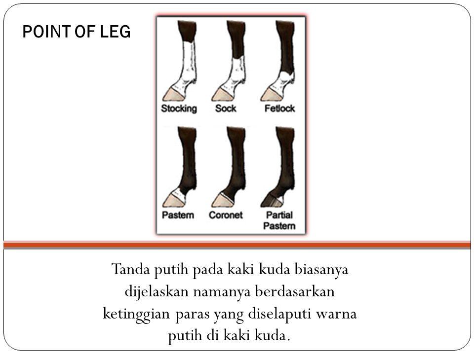 POINT OF LEG Tanda putih pada kaki kuda biasanya dijelaskan namanya berdasarkan ketinggian paras yang diselaputi warna putih di kaki kuda.