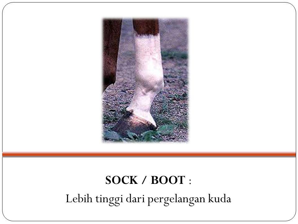 SOCK / BOOT : Lebih tinggi dari pergelangan kuda