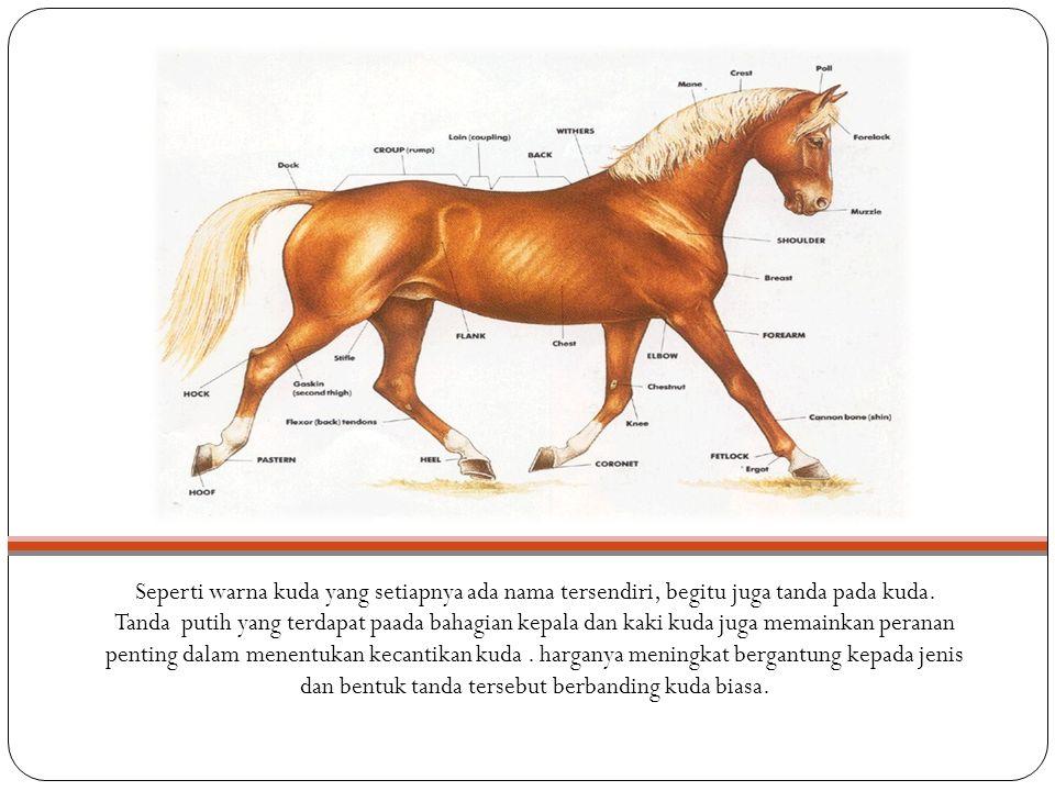 Seperti warna kuda yang setiapnya ada nama tersendiri, begitu juga tanda pada kuda. Tanda putih yang terdapat paada bahagian kepala dan kaki kuda juga
