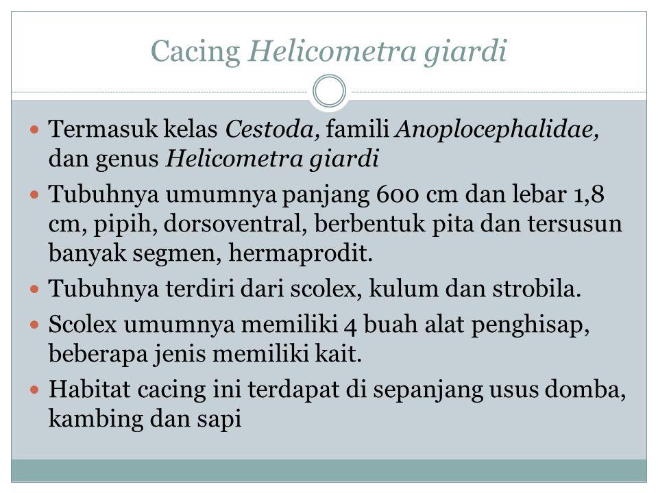 Cacing Helicometra giardi Termasuk kelas Cestoda, famili Anoplocephalidae, dan genus Helicometra giardi Tubuhnya umumnya panjang 600 cm dan lebar 1,8 cm, pipih, dorsoventral, berbentuk pita dan tersusun banyak segmen, hermaprodit.