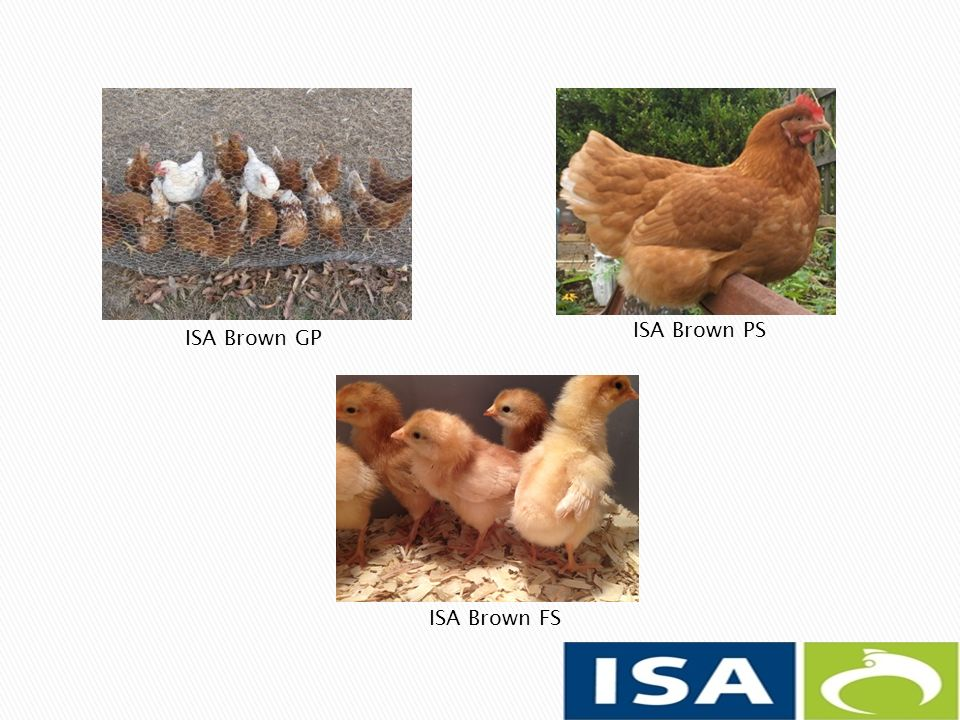 ISA Brown GP ISA Brown PS ISA Brown FS