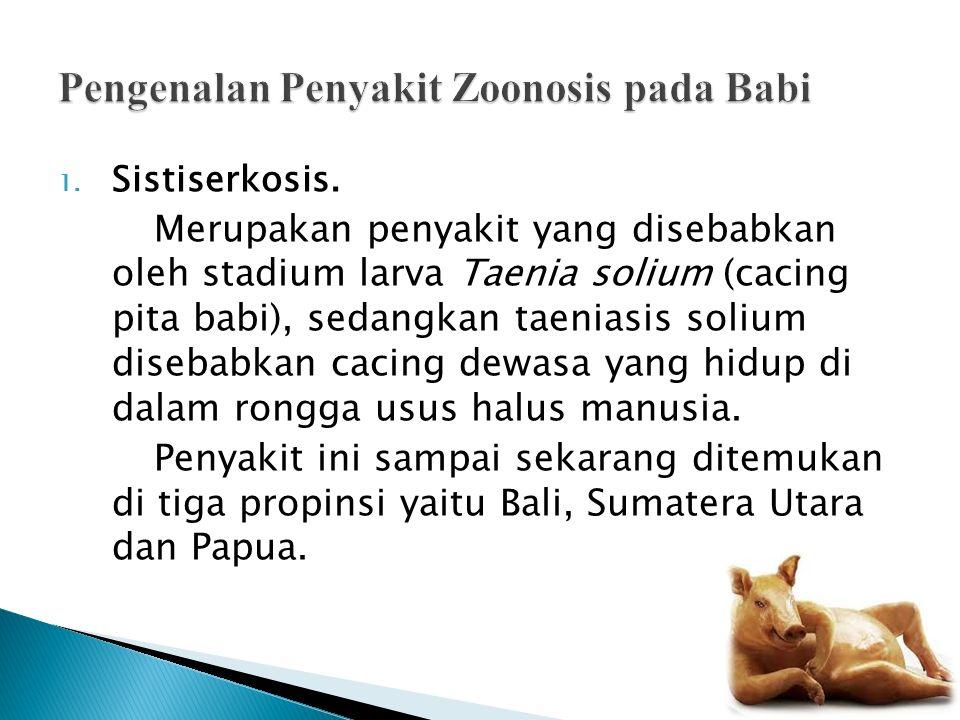 1. Sistiserkosis. Merupakan penyakit yang disebabkan oleh stadium larva Taenia solium (cacing pita babi), sedangkan taeniasis solium disebabkan cacing