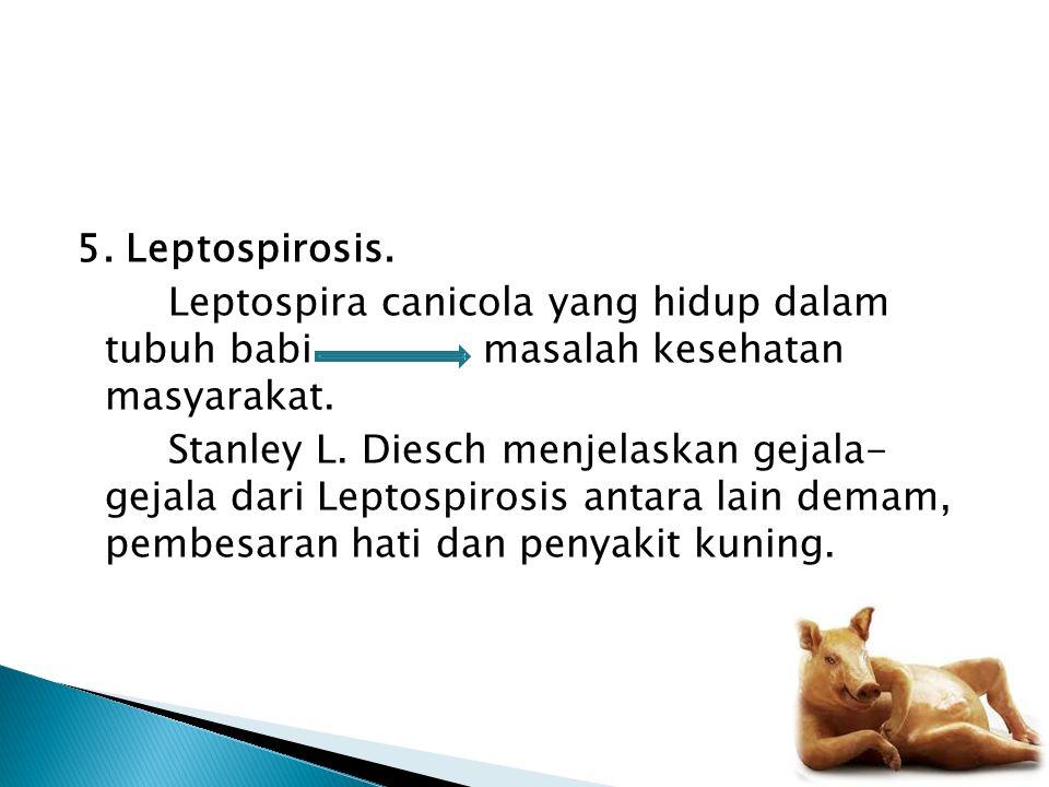 5. Leptospirosis. Leptospira canicola yang hidup dalam tubuh babi masalah kesehatan masyarakat. Stanley L. Diesch menjelaskan gejala- gejala dari Lept