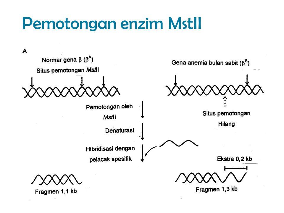 Pemotongan enzim MstII
