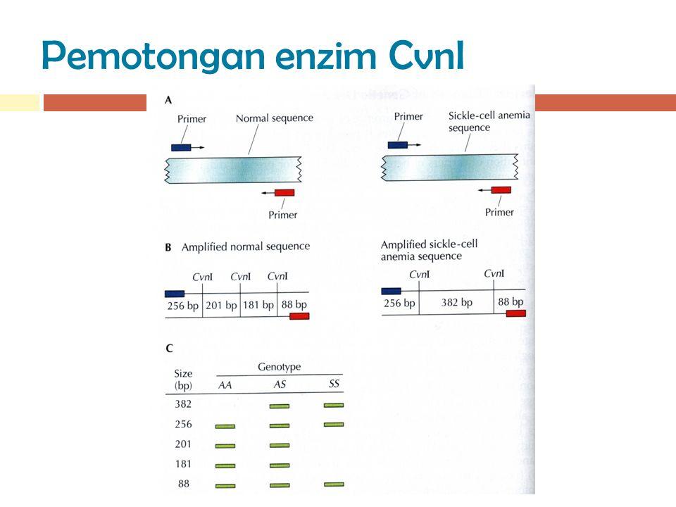 Pemotongan enzim CvnI