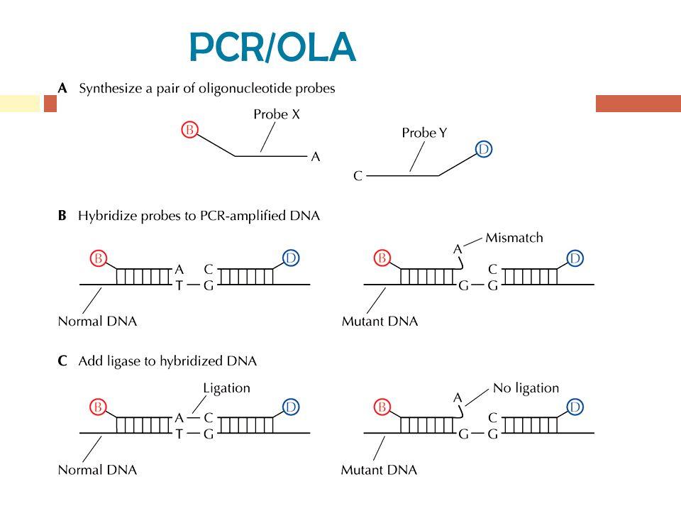 PCR/OLA