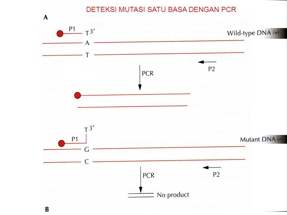 DETEKSI MUTASI SATU BASA DENGAN PCR