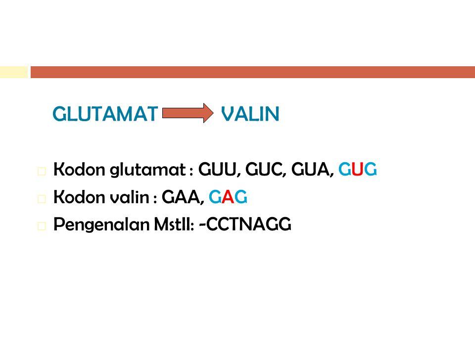 GLUTAMAT VALIN  Kodon glutamat : GUU, GUC, GUA, GUG  Kodon valin : GAA, GAG  Pengenalan MstII: -CCTNAGG