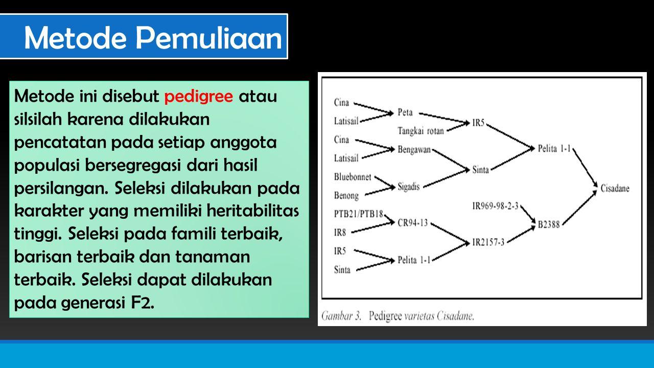 Metode Pemuliaan Metode ini disebut pedigree atau silsilah karena dilakukan pencatatan pada setiap anggota populasi bersegregasi dari hasil persilangan.