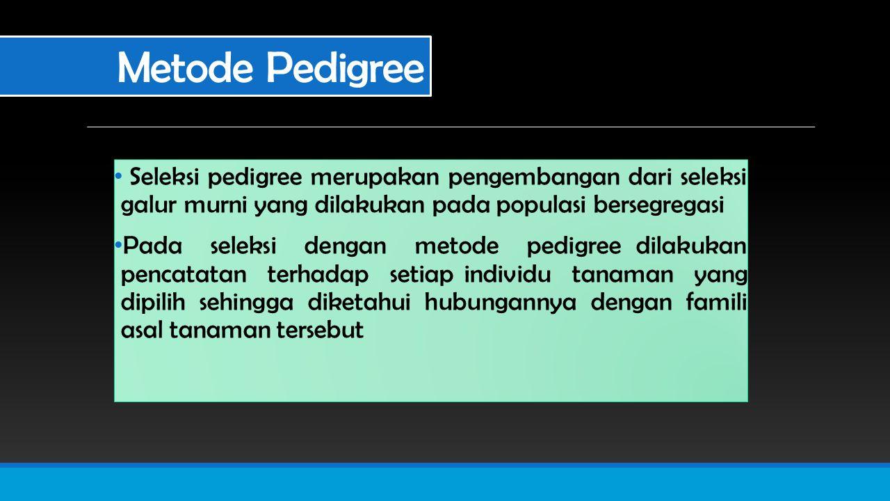 Metode Pedigree Seleksi pedigree merupakan pengembangan dari seleksi galur murni yang dilakukan pada populasi bersegregasi Pada seleksi dengan metode pedigree dilakukan pencatatan terhadap setiap individu tanaman yang dipilih sehingga diketahui hubungannya dengan famili asal tanaman tersebut