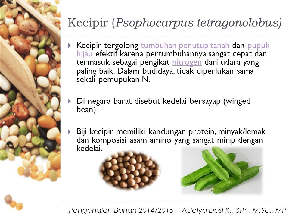 Kecipir ( Psophocarpus tetragonolobus)  Kecipir tergolong tumbuhan penutup tanah dan pupuk hijau efektif karena pertumbuhannya sangat cepat dan termasuk sebagai pengikat nitrogen dari udara yang paling baik.